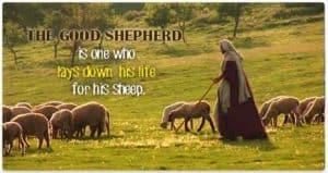 Quote: The Good Shepherd...