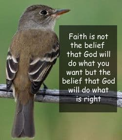 "Quote: ""Faith is not..."""