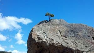 Small tree growing at the tip of a barren cliff