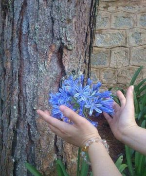Hands reaching for beautiful flower