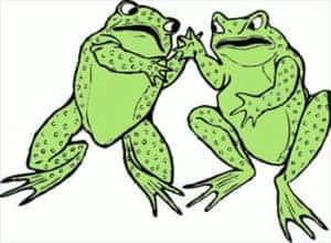Friendly Frogs!