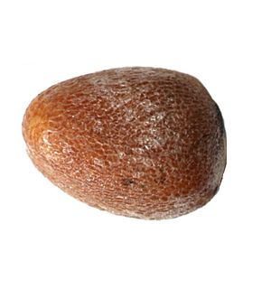 Seed (x1000)