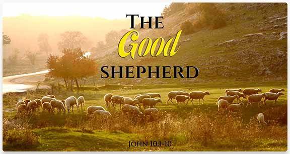 Sheep in Field - Image Title: The Good Shepherd