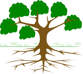 Sketch of tree with its roots