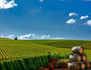 Vineyard and wine barrels