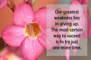 Quote: Our greatest weakness...
